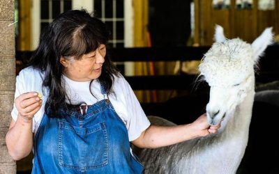 Feature Story: Return of the Alpacas